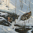 Woodcock in the snow  |  h.50cm w.61cm  |  Acrylic on board