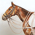 Polo pony  |  h.40.5cm w.51cm  |  Pastel on paper